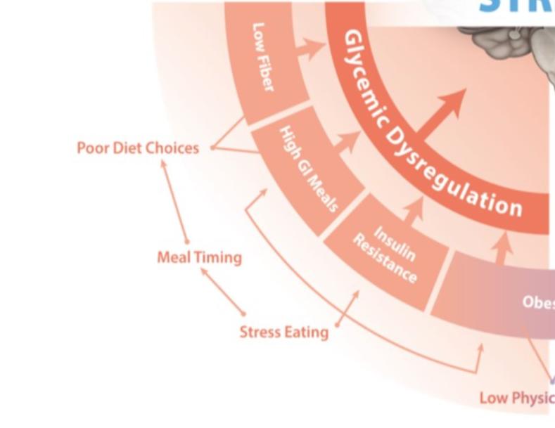 Blog 953 Stress And Gi Tract Glycemic Dysregulation Strength