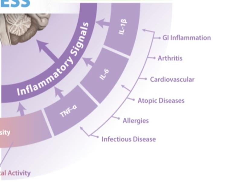 Blog 95.4 Stress and GI Tract (Inflammatory Signals)
